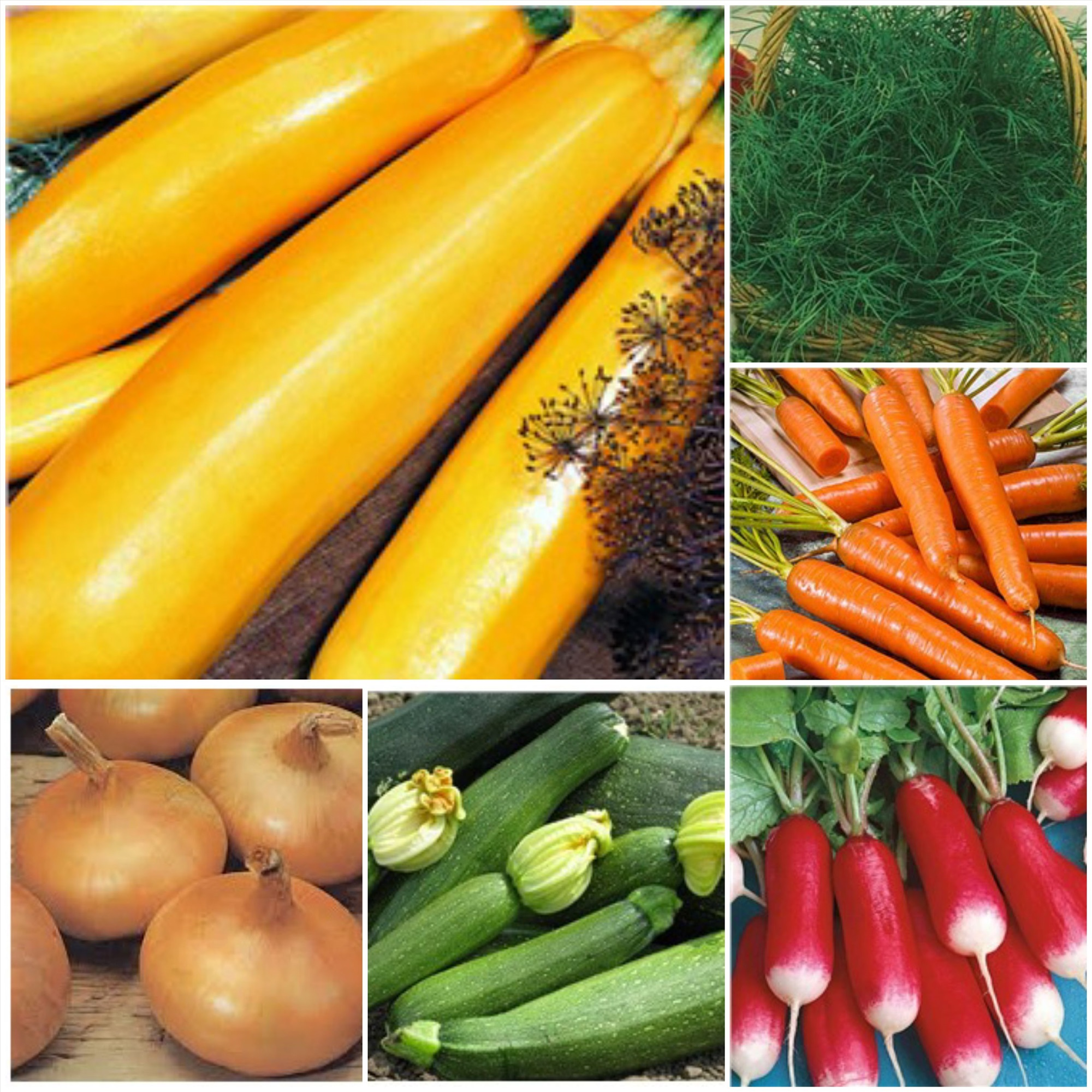 Покупка семян в интернет-магазине: основные преимущества